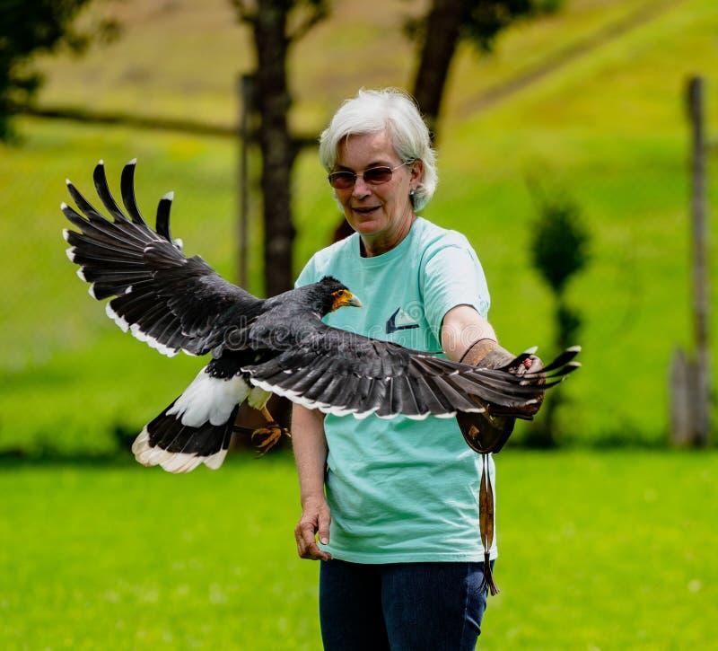 Gualaceo, Equateur/le 1er juin 2018 : Une femme tient un oiseau de la proie a photographie stock libre de droits