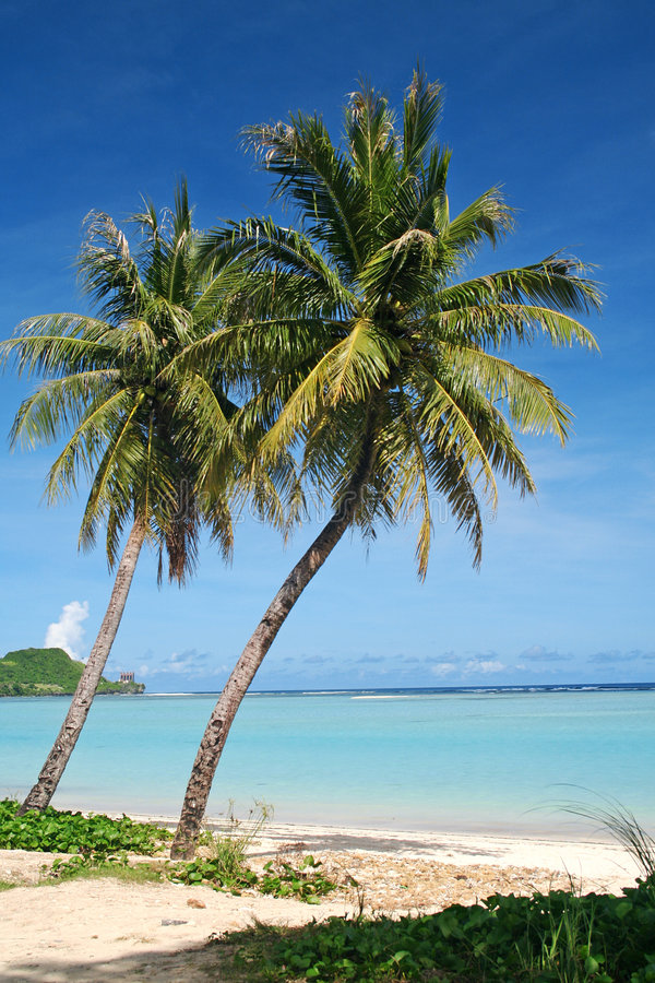 Free Guam Tropical Coconut Trees Royalty Free Stock Images - 1041799