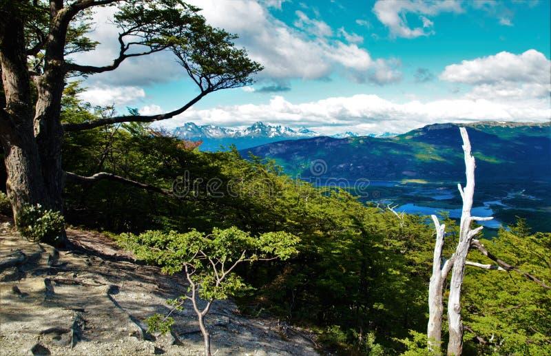 Guanaco de Cerro en Tierra del Fuego images stock