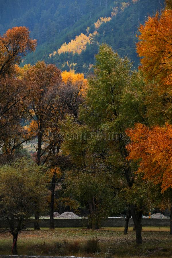 Scenery of Guanegou National Forest Park in China`s Gansu royalty free stock photography