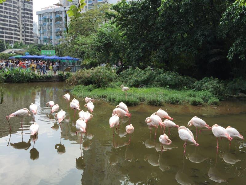 guangzhou fotografia de stock