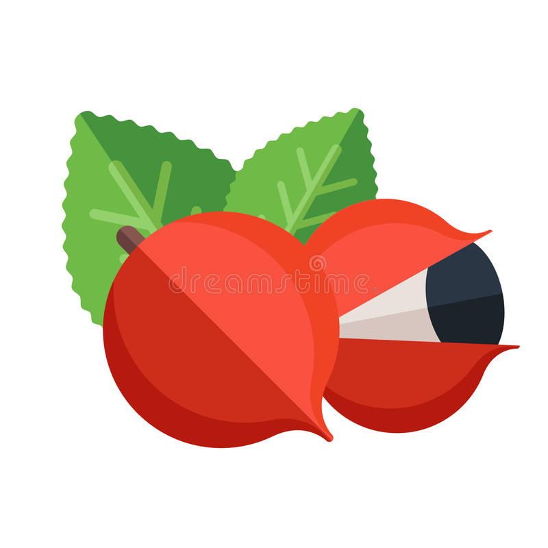 Guarana fruit and leaves vector illustration. Superfood Paullinia cupana icon. Healthy detox natural product. Flat design organic. Food vector illustration