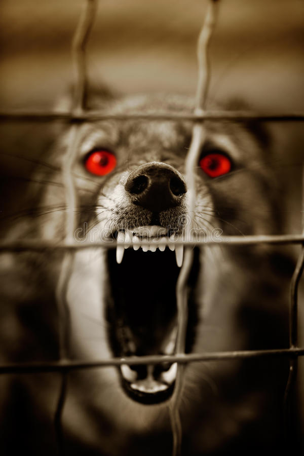 Download Guard dog stock image. Image of vertical, animal, barbwire - 18280867
