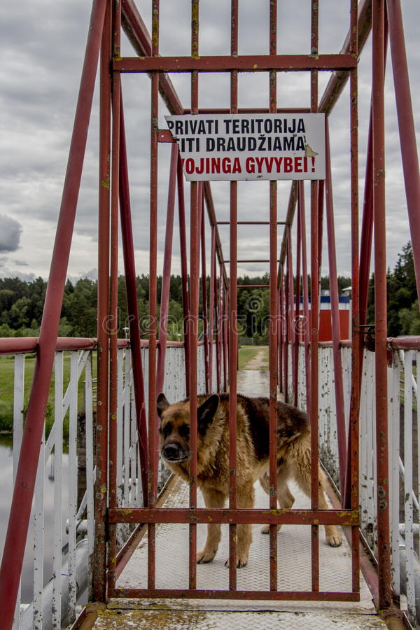 Atention guard dog royalty free stock photos