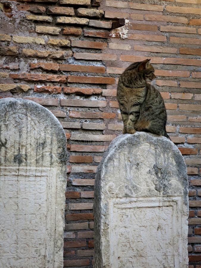 A stray cat guarding the grave stones of the praetorian guards in Rome. Cat, Pet, Rome, Pretorian, Grave, Stone, History, Modernity, Absurd, Travel, Adventure royalty free stock images