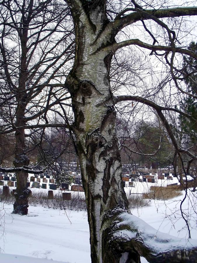 Guard tree in the cemetery stock photos