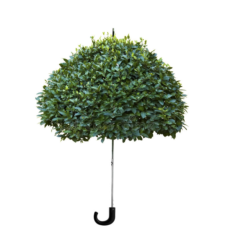Guarda-chuva de madeira fotos de stock