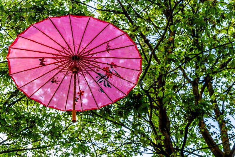 Guarda-chuva ou parasol chinês cor-de-rosa sob um dossel de árvore em Yale Town foto de stock