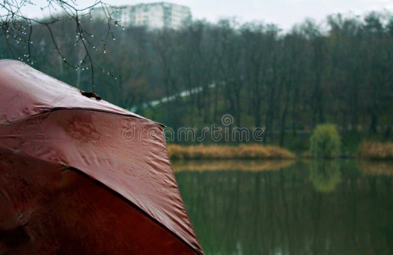 Guarda-chuva vermelho em um dia chuvoso perto de um lago e de uma floresta imagens de stock royalty free