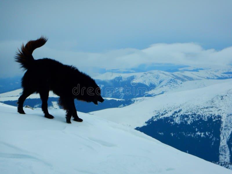 Guarda de la montaña foto de archivo libre de regalías