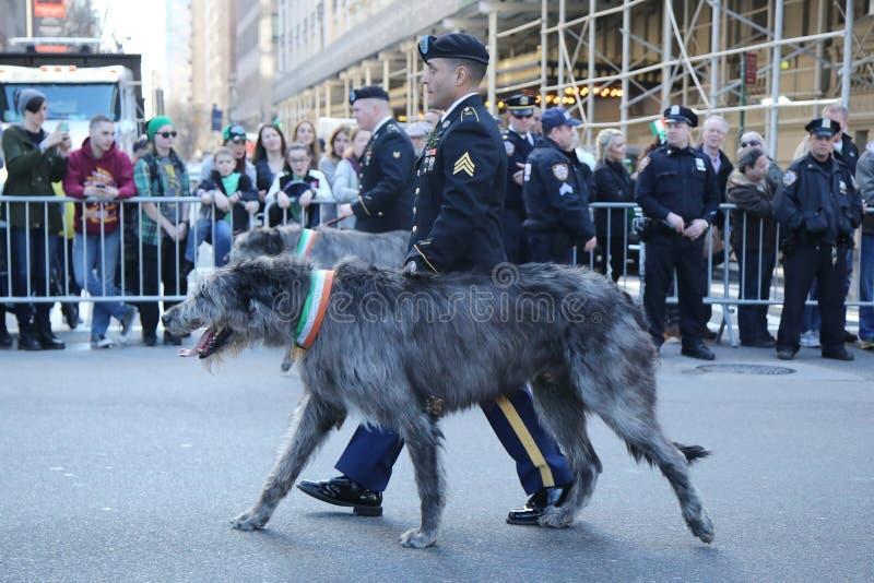 Guarda florestal do exército de Estados Unidos com o cão caçador de lobos irlandês que marcha na parada do dia do ` s de St Patri imagens de stock