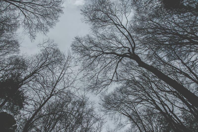 Guardando al cielo attraverso gli alberi immagine stock