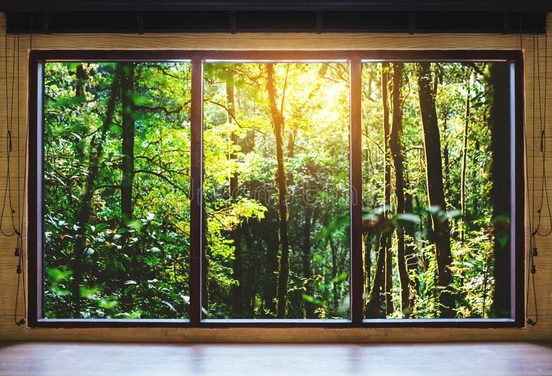 Guardando attraverso la finestra, foreste tropicali nella vista di alba immagini stock libere da diritti