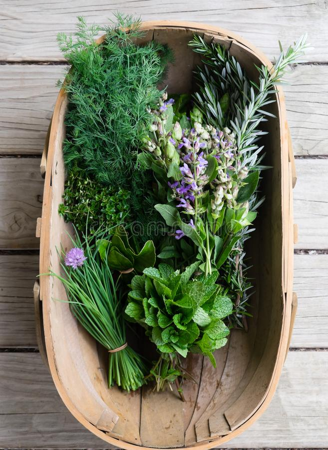 Guardando giù nel canestro di legno del raccolto delle erbe organiche fresche: fotografia stock