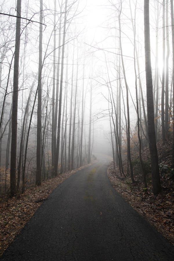 Guardando giù un azionamento rurale su una mattina nebbiosa fotografia stock libera da diritti