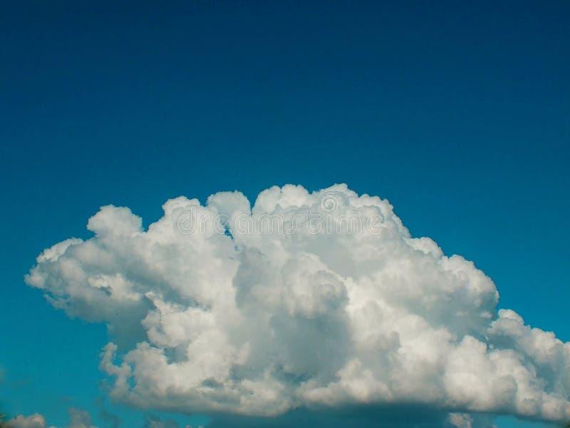 Guardando sotto l'albero, i rami hanno visto il cielo dal cielo del natureThe, nuvole bianche dalla bella natura fotografie stock