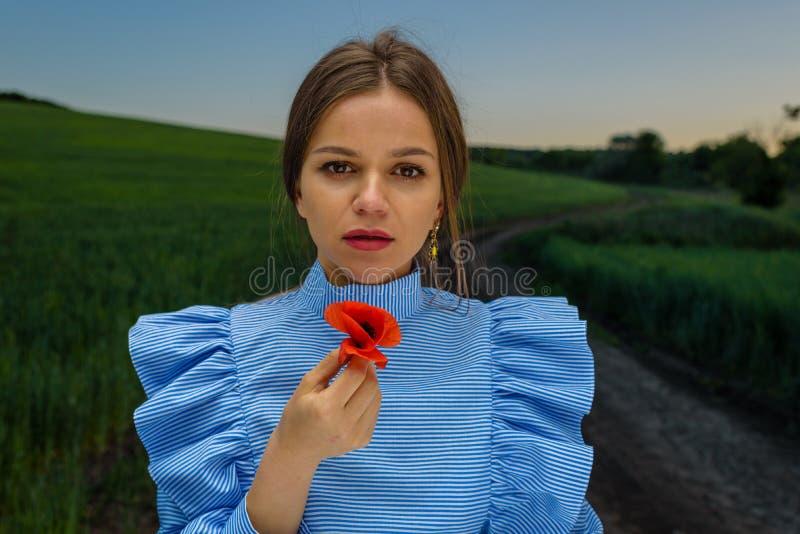 Guardando uma papoila vermelha fotografia de stock royalty free