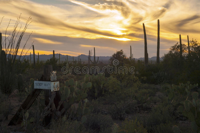 Guarde fuera de desierto del cactus del Saguaro en la puesta del sol imagen de archivo libre de regalías