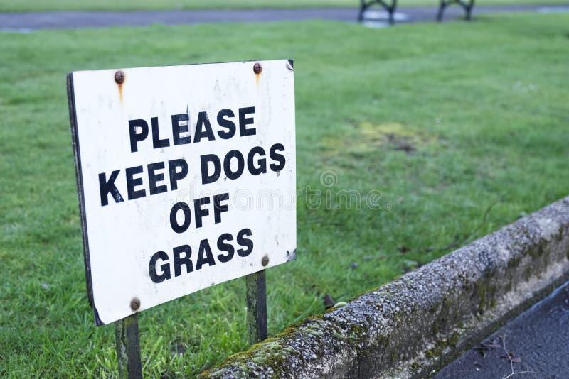 Guarde los perros de muestra de la hierba imagen de archivo libre de regalías