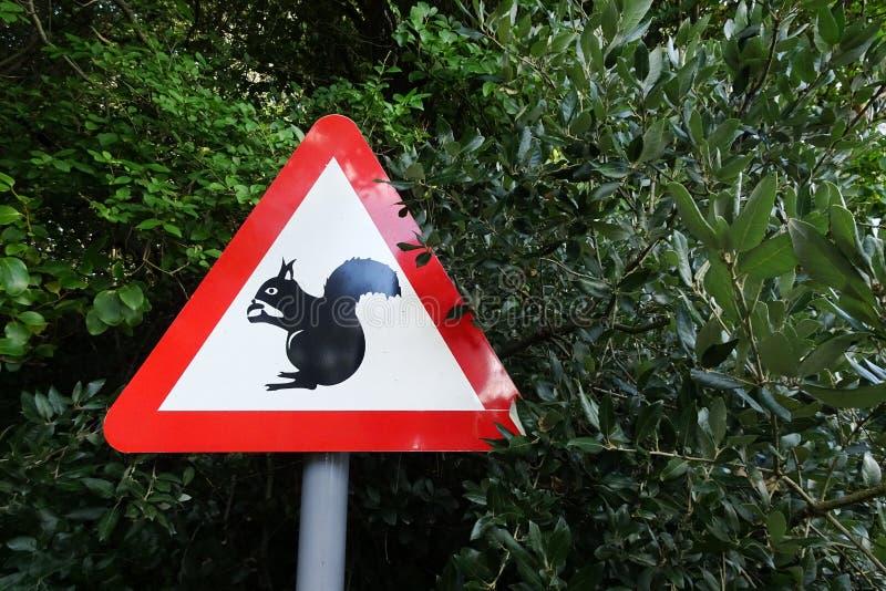 Guardi da degli scoiattoli immagine stock