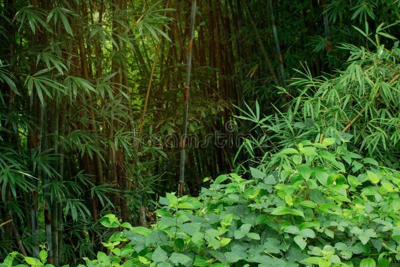 Guardi dai pericoli nascosti e dia il benvenuto a alla giungla Tha di cose fotografia stock libera da diritti