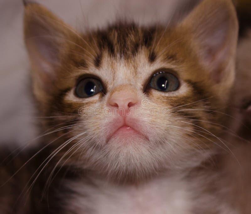 Guardi del gatto del gattino immagine stock