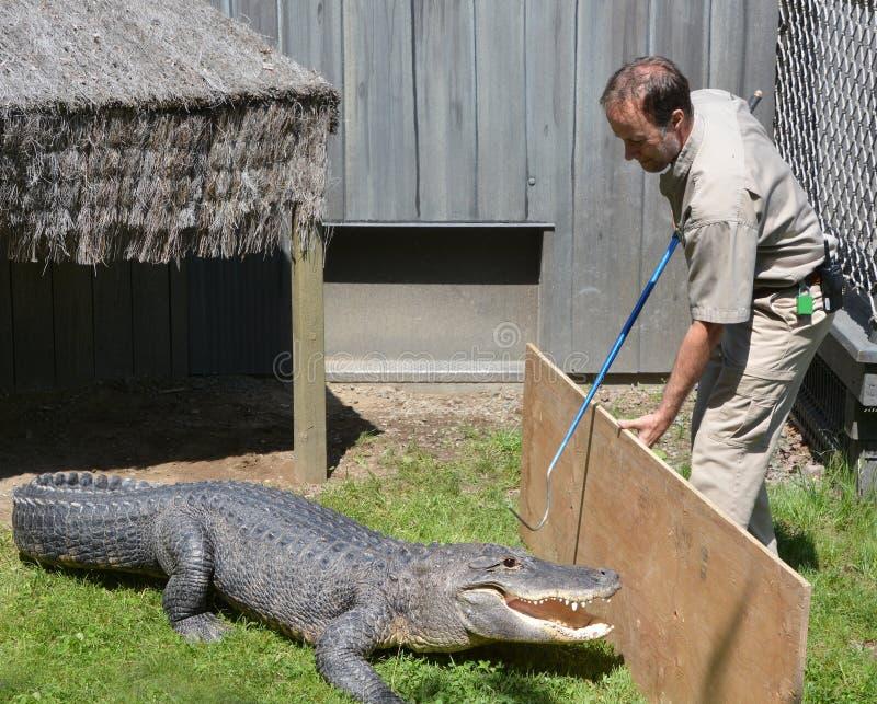 Guardia dello zoo di Granby immagini stock