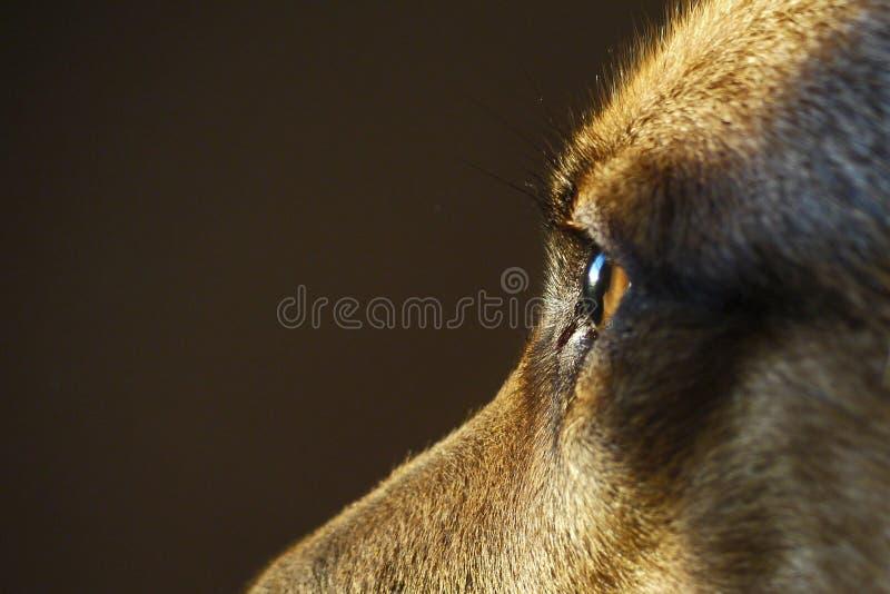 Guardia Dog fotos de archivo libres de regalías