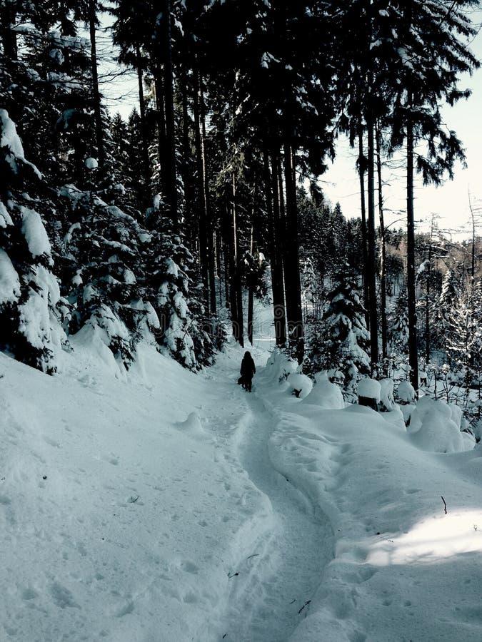 Guardia forestale perso fotografia stock libera da diritti