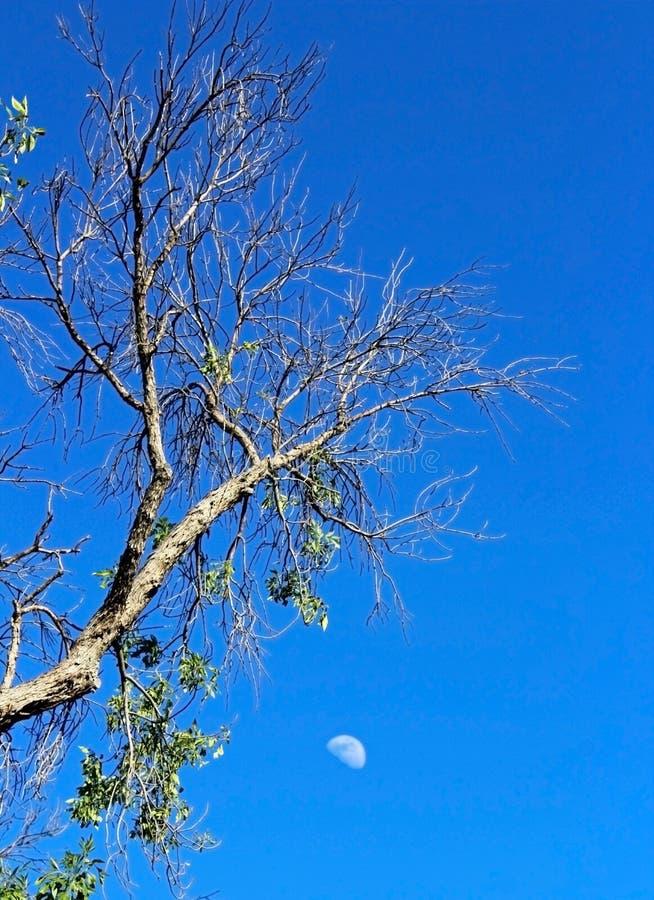 Guardia notturna Campground, Zion National Park fotografia stock libera da diritti