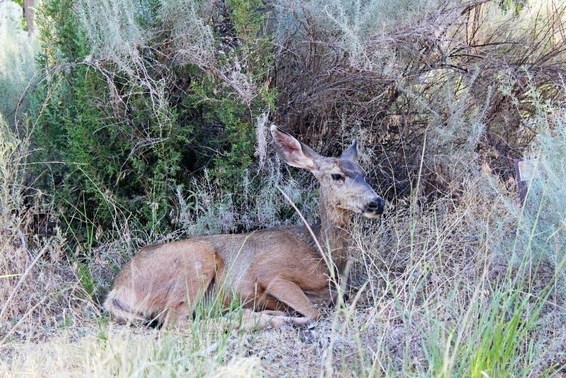Guardia notturna Campground, Zion National Park immagini stock libere da diritti