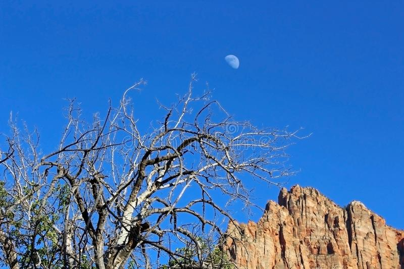 Guardia notturna Campground, Zion National Park immagine stock