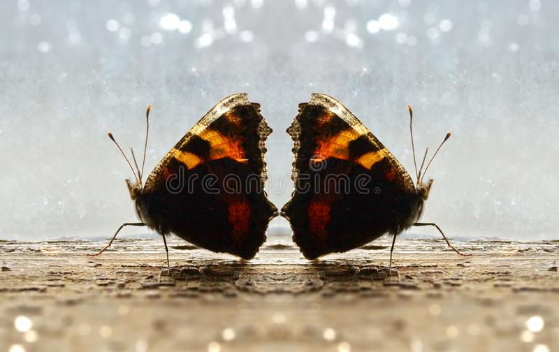 guards of love two butterflies walk by the old window royalty free stock image