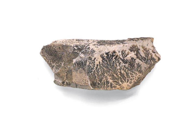 GUARNICIÓN CRISTALINA, Éstos helecho-como crecimientos parecen una planta pero son de hecho crecimientos cristalinos del pyrolusi imagen de archivo libre de regalías