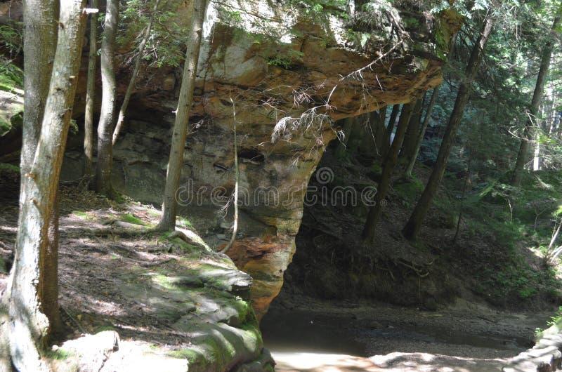 Guarnición del bosque y vista de la naturaleza imagenes de archivo
