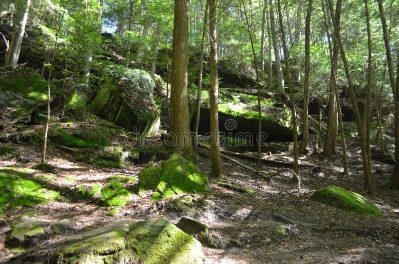 Guarnición del bosque y vista de la naturaleza foto de archivo libre de regalías