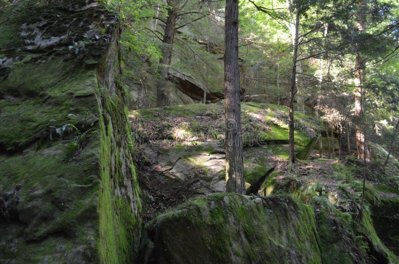 Guarnición del bosque y vista de la naturaleza fotografía de archivo