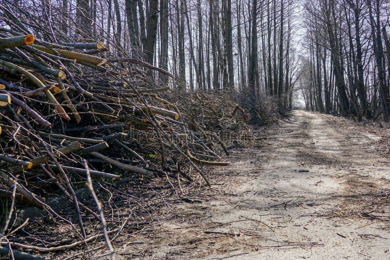 Guarnizione dei rami di albero ed assottigliare gli alberi in pianta suburbana fotografia stock