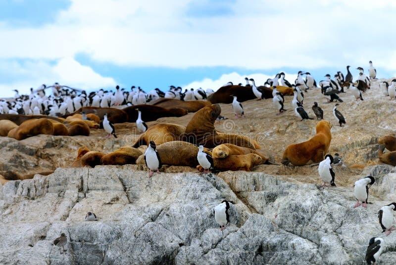 Guarnizioni di elefante e re Cormorants immagine stock libera da diritti