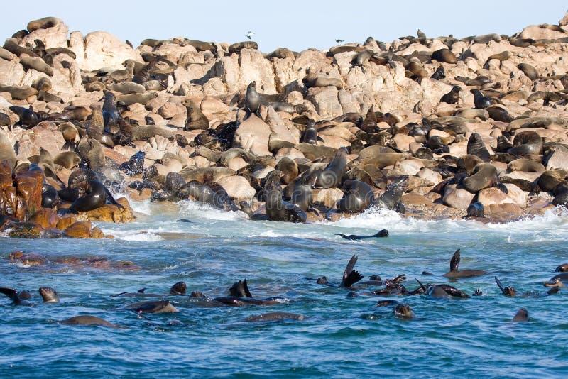 Guarnizioni di pelliccia del Brown (isola del tintoriale) immagine stock libera da diritti