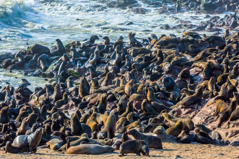 Guarnizioni di pelliccia della riserva fotografia stock libera da diritti