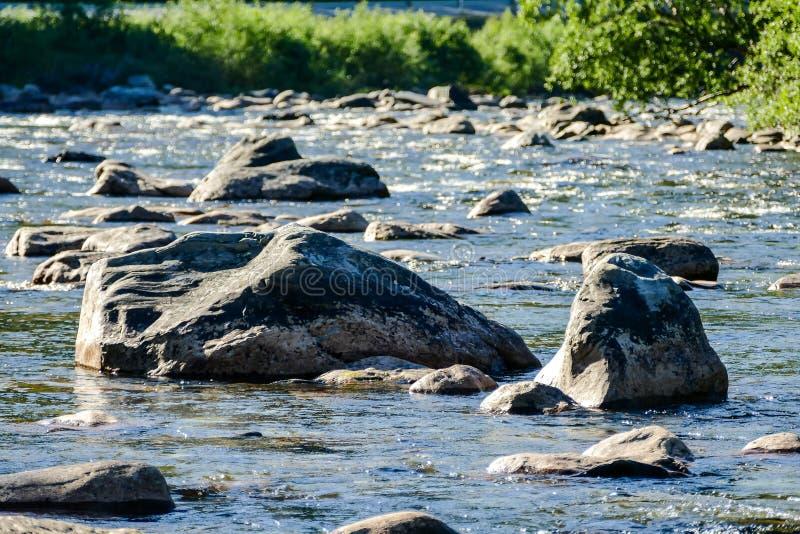 guarnizioni su roccia, in Svezia Scandinavia Europa del nord fotografia stock