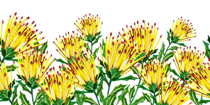 Guasz bezszwowa kwiecista granica z kolorem żółtym kwitnie z zielonymi liśćmi na białym tle royalty ilustracja