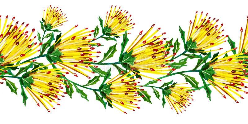 Guasz bezszwowa kwiecista horisontal granica z kolorem żółtym kwitnie z ostrymi liśćmi na białym tle royalty ilustracja