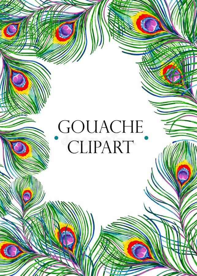 Guasz egzotyczna prostokątna rama z kolorowymi pawimi piórkami ilustracja wektor