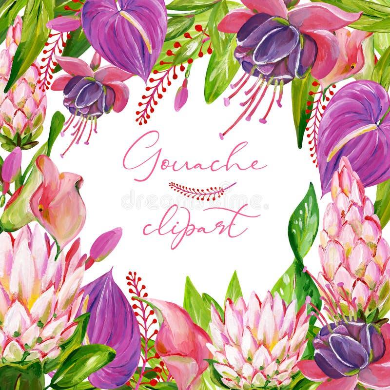 Guasz kwadratowa egzotyczna kwiecista rama z Protea, kalia, Anthurium i fuksja, kwitniemy ilustracja wektor
