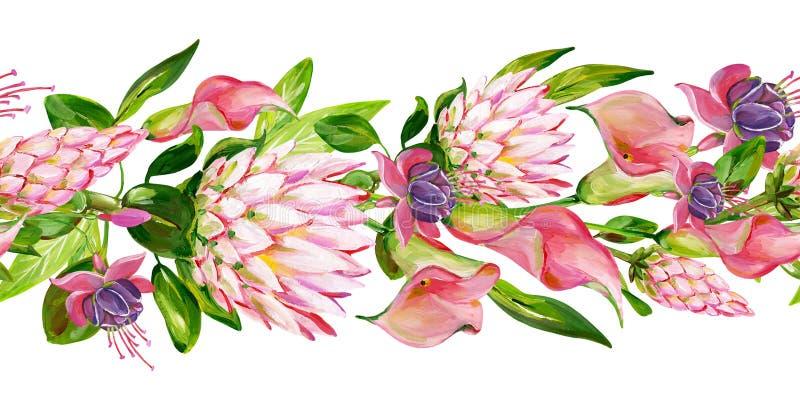 Guasz kwiecista granica z różowym Protea, różowa kalia, zieleń opuszcza i fuksja kwitnie ilustracja wektor