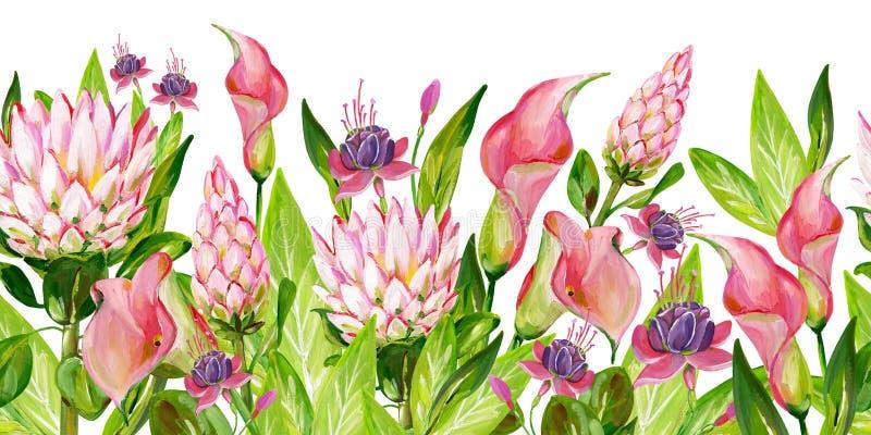Guasz różowa kwiecista granica z różowym Protea, różowa kalia, zieleń opuszcza i fuksja kwitnie royalty ilustracja