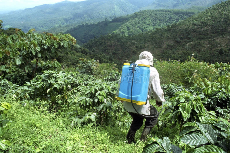 Farmer spraying coffee plants in mountain scenery royalty free stock image
