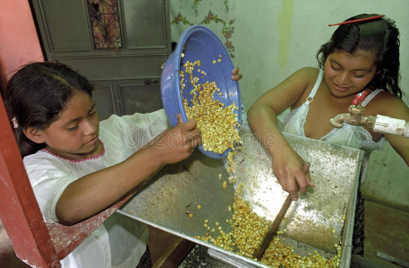 Guatemalan Indian girls grinding maize in a mill. Guatemala, department Alto Verapaz, San Cristobal village: in the mountains around Coban is the main food of stock image